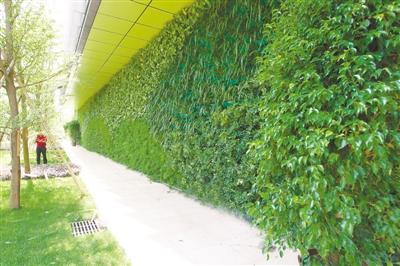 如何让花草在墙上种出来——墙体垂直飞速直播录像,打造个性化艺术飞速直播录像墙