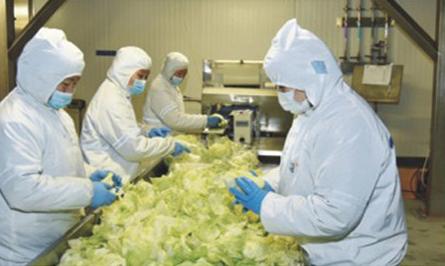 """超級真菌被美國列為""""緊急威脅"""",中國已有18例確認感染"""