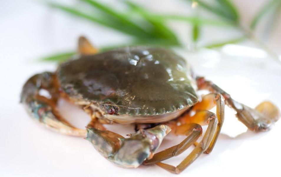 关于降低因药物杀灭青苔造成河蟹养殖危害的若干建议