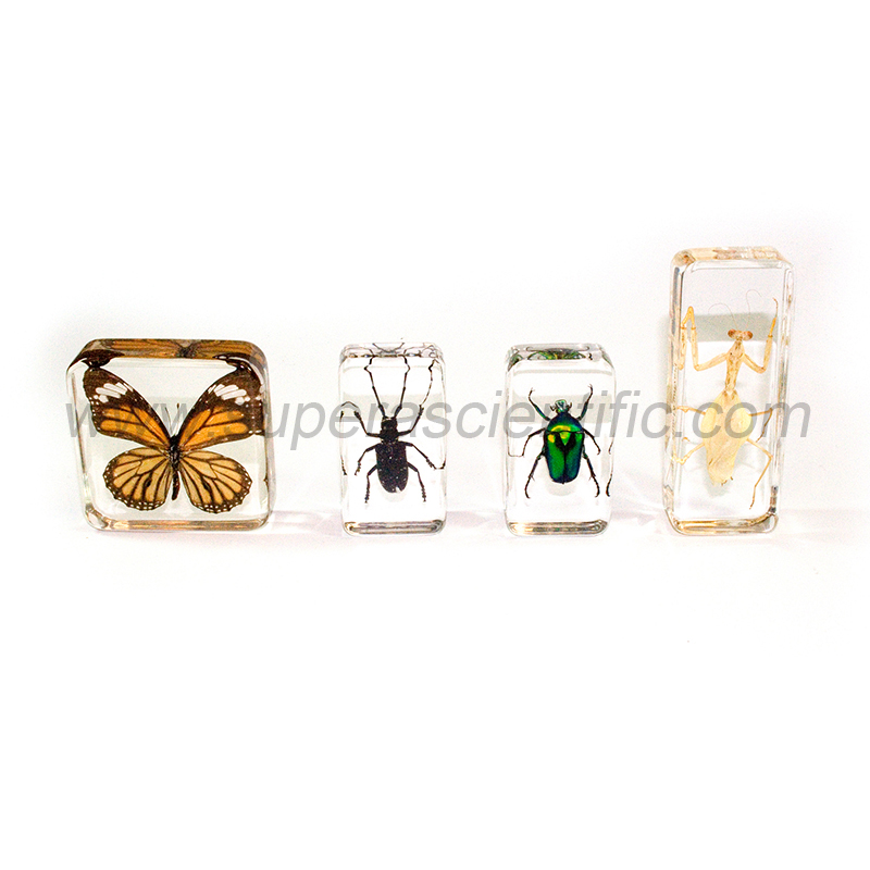 903 Molded Plastic Specimens, Insects, 4pcs/set
