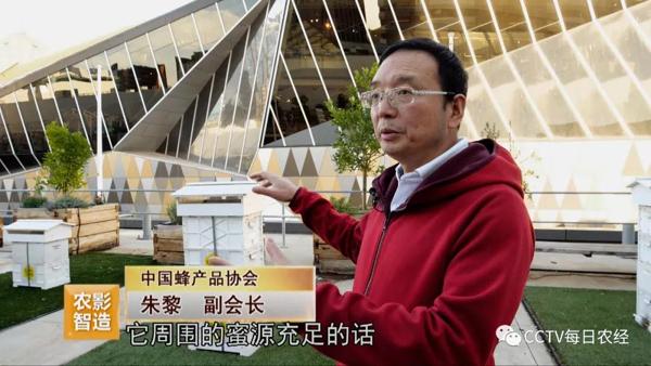 CCTV《每日農經》| 養蜂不賣王漿賣蜂王(葆春澳洲專題上)