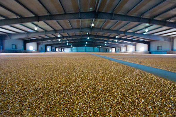 金燦燦的玉米糧庫