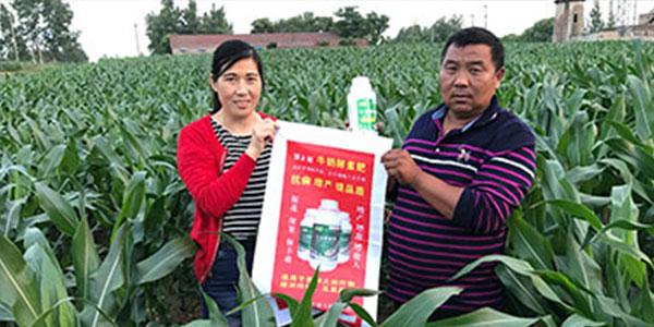 腐植酸水溶肥+菌肥+水溶肥+牛奶肥