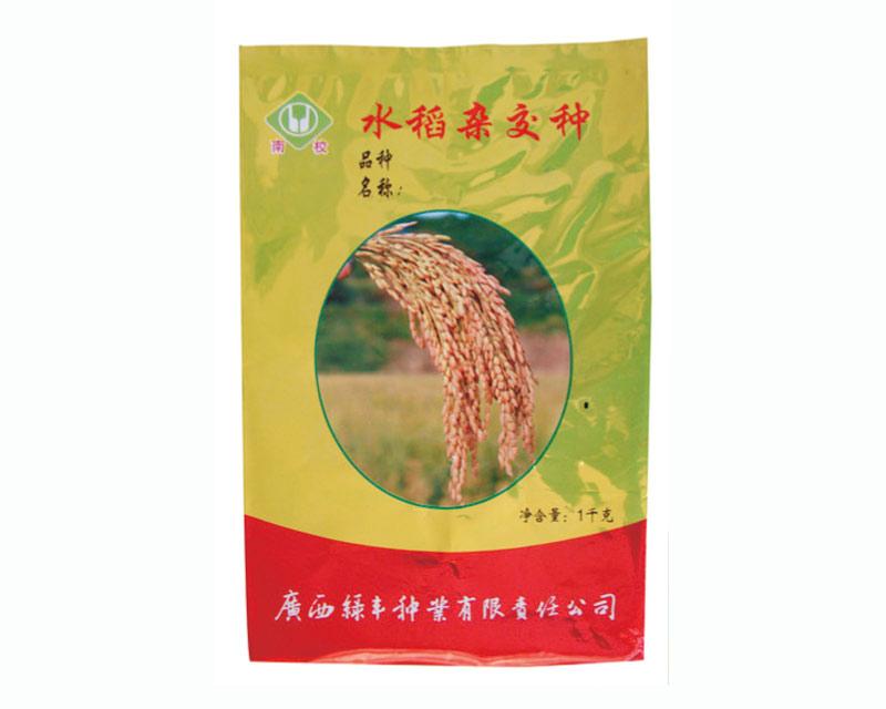 水稻雜交種