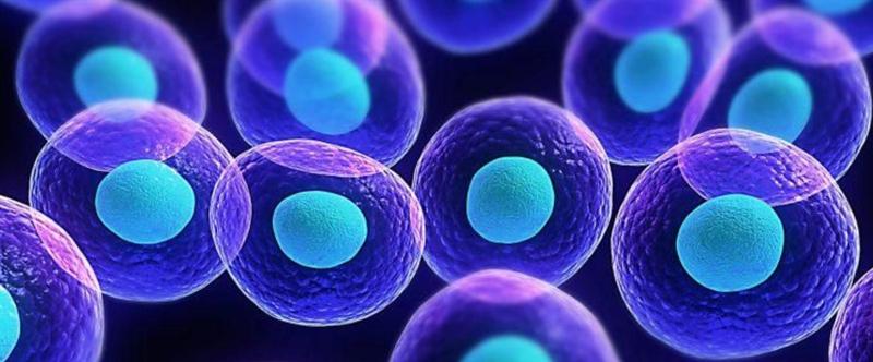 小分子肽对新冠病情恢复的益处得到国家权威科研学术单位认可!