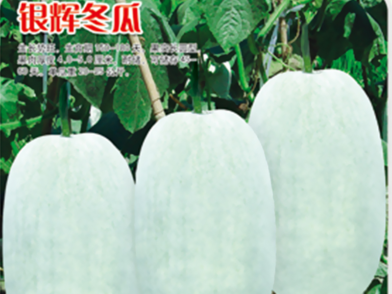 Yinhui Winter Melon
